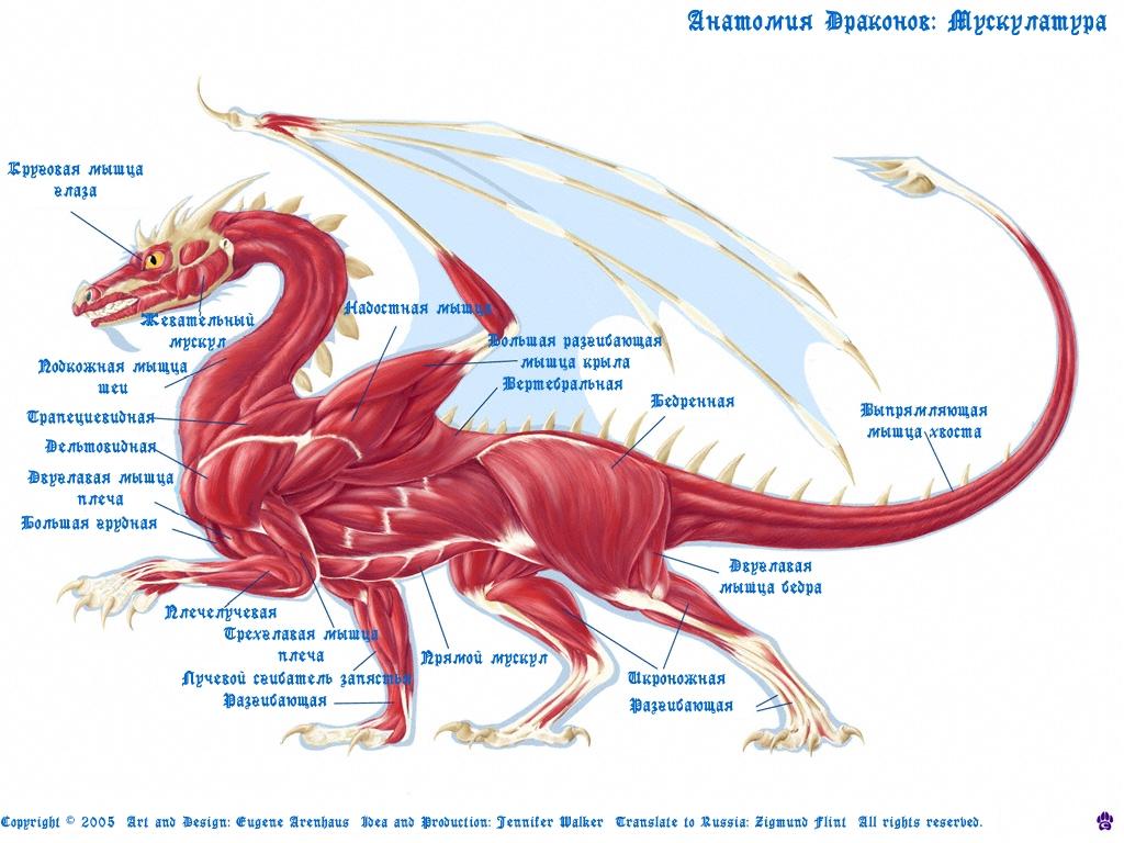 Картинки китайского дракона